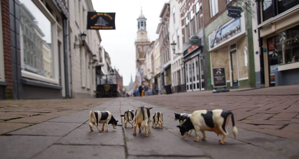 miniparade koeien